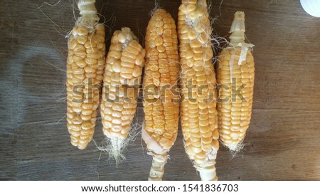 Five corn on the cob homegrown on wood background