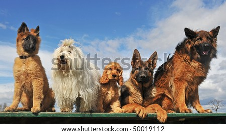 five dogs and puppies lying down and sitting on a table