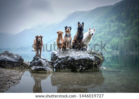 Five dogs are sitting on a rock in beautiful scenery. Friendship between dogs. Obedient dogs of different breeds.