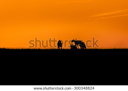 Five dogs racing backlit. Five greyhounds playing at sunset on the hill. Dogs silhouette backlit at sunset.