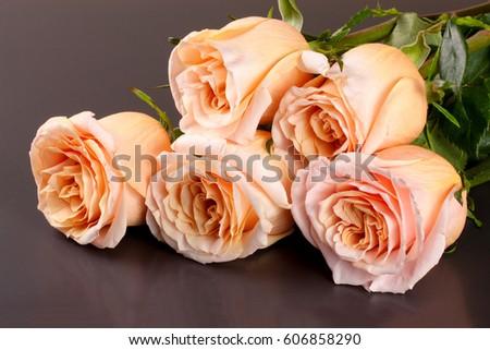 five fresh beige roses on a dark wooden background #606858290