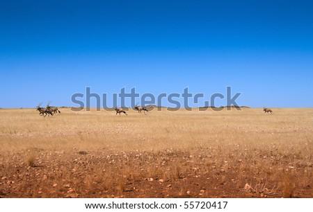five gemsbok oryx running across a desert plain in Namibia