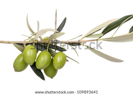 five green olives on branch