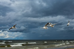 five gulls fly over the sea with greenish water and waves with white foam, a rich blue sky with heavy dark clouds, birds are illuminated by the sun