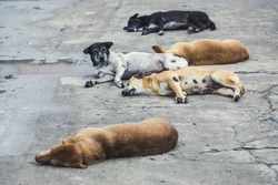 five homeless stray dogs sleeping on the street , color vintage style