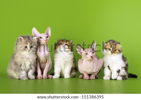 Five kittens of different breeds.