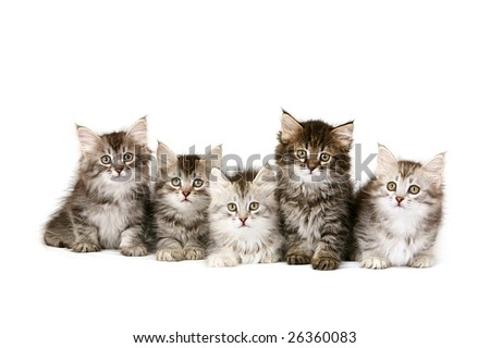 Five Kittens Sitting In A Row Stock Photo 26360083 ...
