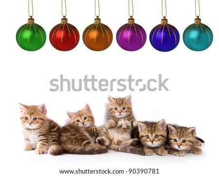 Five little kittens for present