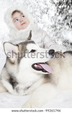 Five month old malamute puppy with a girl. Focus on a dog