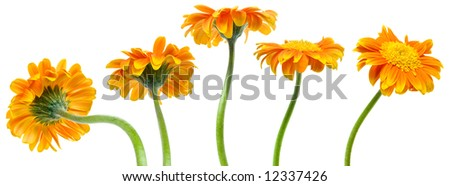 five orange flower