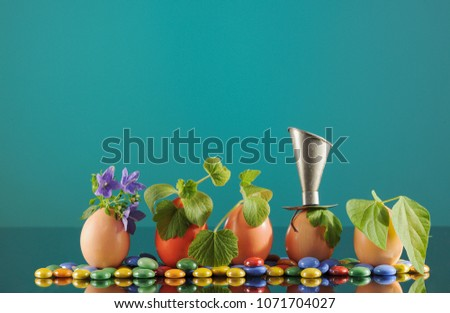 Five organic seedling plants in Easter eggs on turquoise background, eco gardening. Horizontal.