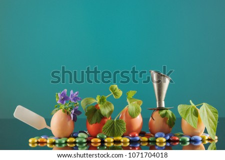 Five organic seedling plants in eggshells on turquoise background, eco gardening. Horizontal.
