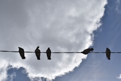 Five pigeons standing on a line against white clouds and blue sky background