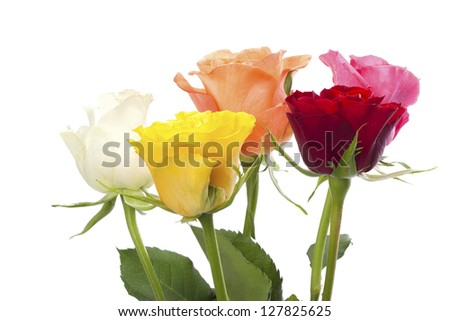 Five roses in pink, orange, white, yellow and red