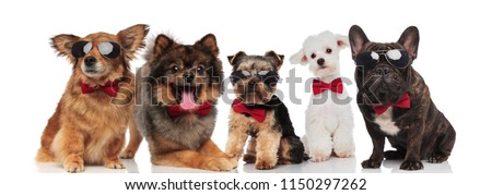 five stylish dogs of different breeds wearing red bowties while standing, sitting and lying on white background #1150297262