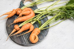 Five ugly carrot roots on a round wooden Board. Place for a copy space