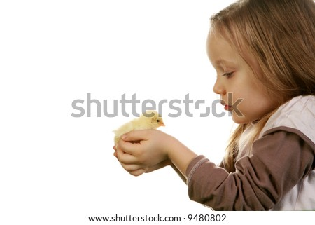 Five years old girl holding gently baby chicken (2 days old) on white background.