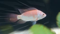 fizzle swim fish fast