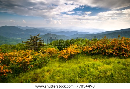Flame Azalea Blooms Blue Ridge Mountains Roan Highlands State Park on Appalachian Trail