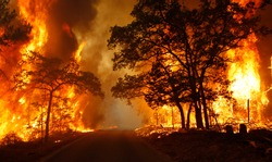 Flames engulf a road near Bastrop State Park as a wildfire burns out of control near Bastrop, Texas September 5, 2011. An estimated 1,000 homes are being threatened in Bastrop County.so please protect