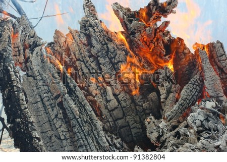 Flaming snag - forest in fire