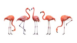 Flamingo bird animal set photo isolated on white background. This has clipping path.