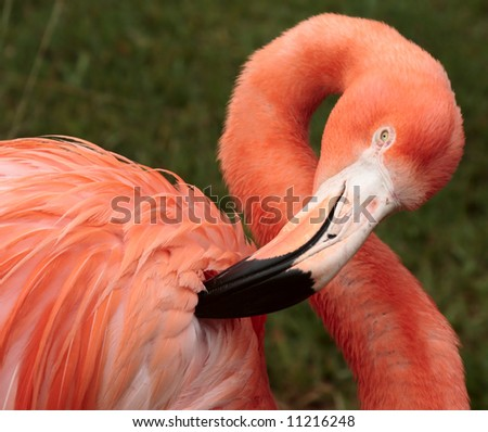 flamingo bird wildlife tropical jungle cleaning animal