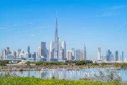 Flamingo birds in zoo park with Dubai Downtown skyline with blue sky in United Arab Emirates or UAE. Financial district in urban city. Ras Al Khor Wildlife Sanctuary. Wildlife Animal.