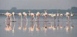 Flamingo Birds on lake