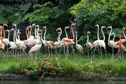 Flamingo birds standing in a lake