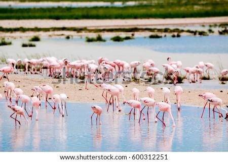 flamingo etosha national park namibia country africa