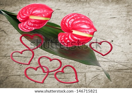 Flamingo flower with decorative hearts on wooden background / Love