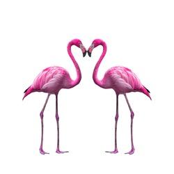 flamingo in lovely moment