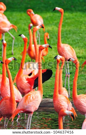 Flamingo in Miami zoo in red color
