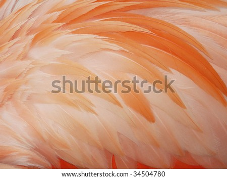 Flamingo's feathers