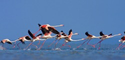Flamingo's in Mozambique southern Africa