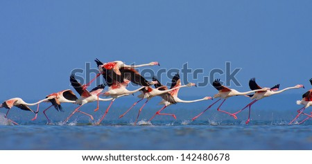 Stock Photo Flamingo's in Mozambique southern Africa