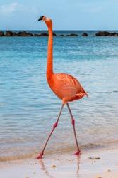 Flamingo strutting his stuff on the beach.  Standing tall.