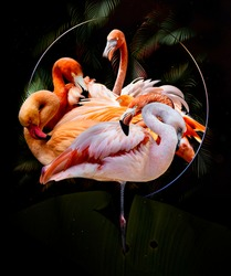 Flamingos abstract artwork in dark black background of jungle and circle frame, pink flamingo digital painting in dark garden style, decoration graphic