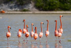 Flamingos are native to  the Turks and Caicos. On Grand Turk they can be found throughout the island but are most often found hanging out in Town Salina