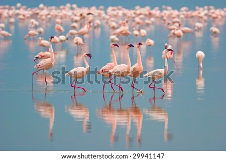 Flamingos at Nakuru Lake, Kenya.