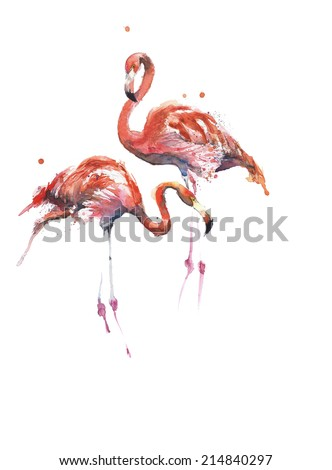 Flamingos handmade watercolor painting isolated on white