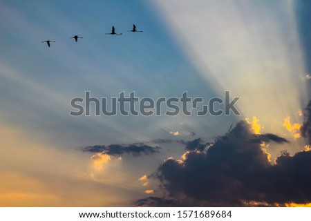 flamingos in flight with sunbeams crossing the clouds during sunset in the nature reserve of vendicari in Sicily, Italy #1571689684
