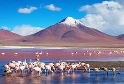 flamingos in Laguna Colorada , Bolivia