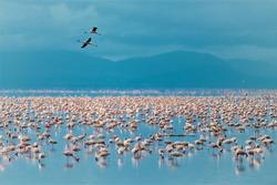 Flamingos in Lake Manyara in Tanzania
