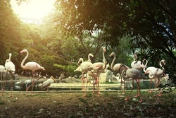 Flamingos in the Kuala-Lumpur birds park,Malaysia