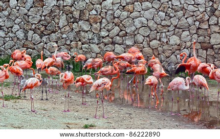 Flamingos in the park as xcaret - Mexico
