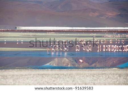 Flamingos in the Salt flat of Atacama (Chile)