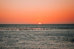 flamingos in the water on the background of the sunset