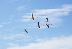 Flamingos on Ria Formosa Faro Portugal